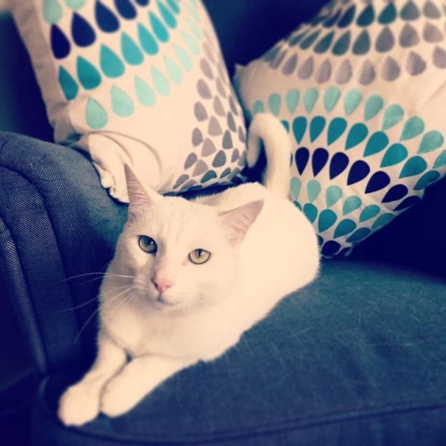 Photo of Zuri
