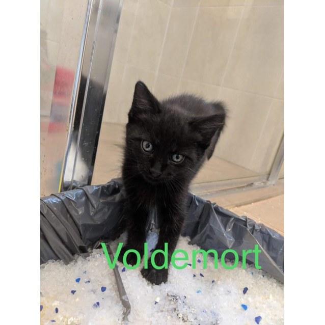 Photo of Voldemort