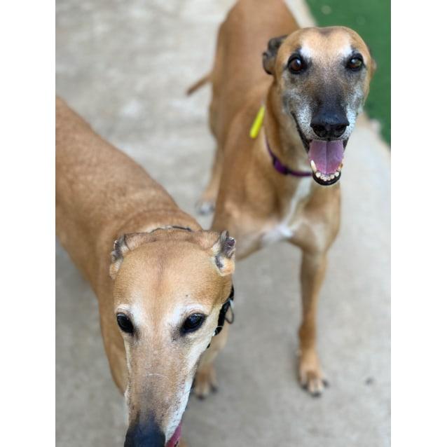 Photo of Hattie & Wesley (In Foster)