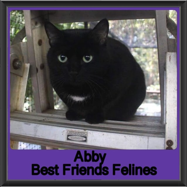 Photo of Abby