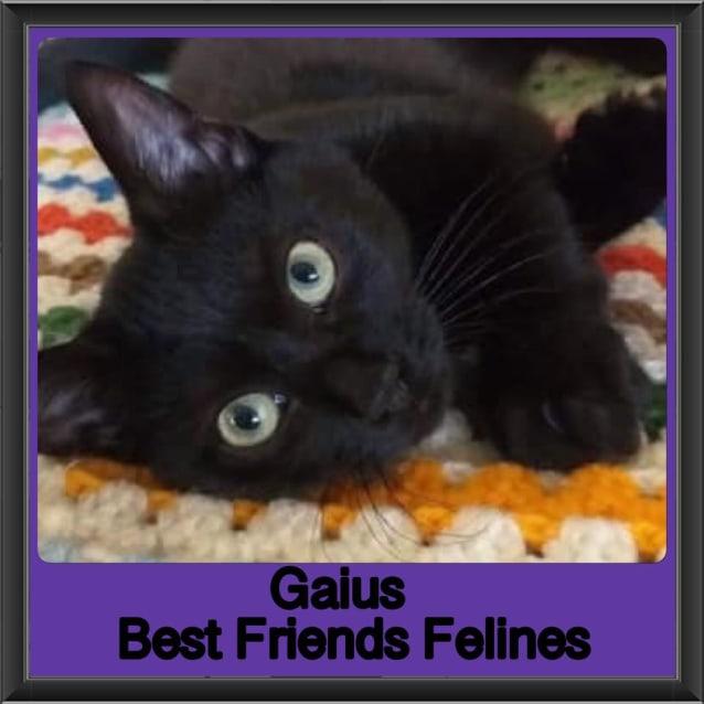 Photo of Gaius