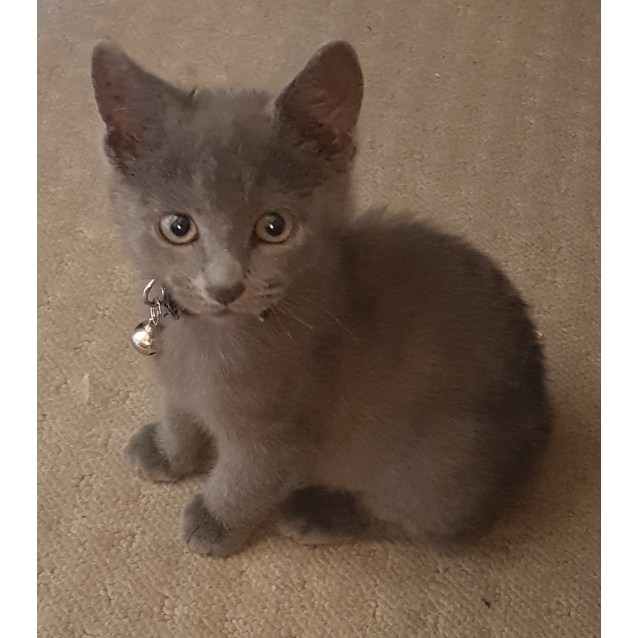 Photo of Grey * On Trial With My New Family*