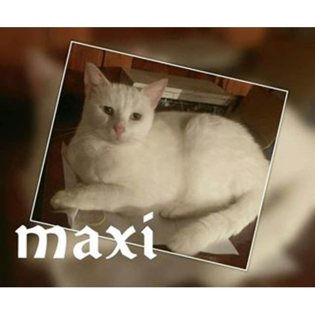 Photo of Maxi