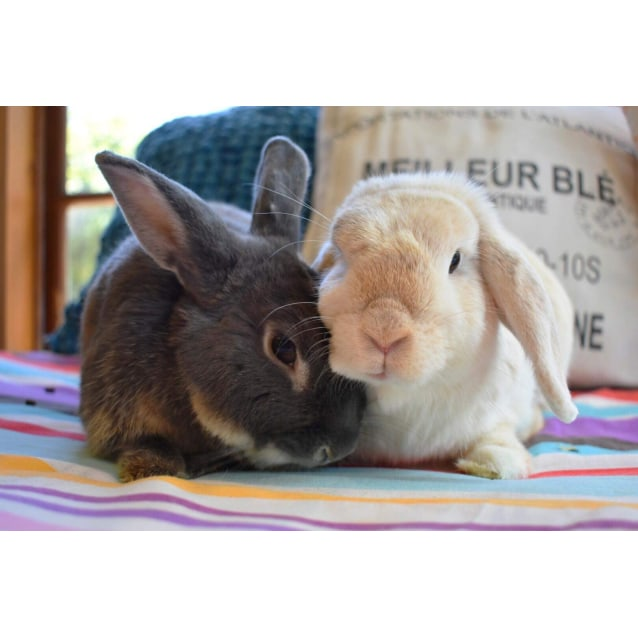 Photo of Toby And Pancake