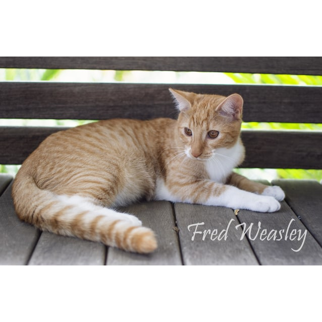 Photo of Fred Weasley