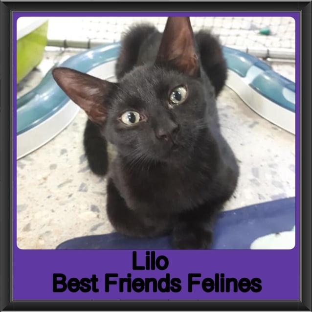 Photo of Lilo