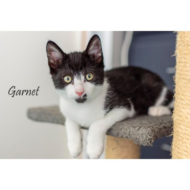 Photo of Garnet