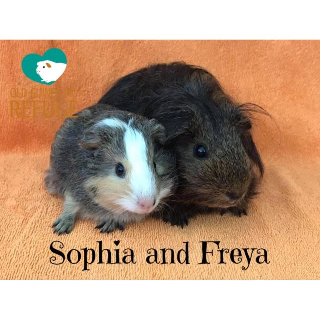 Photo of Sophia And Freya (Indoor Home Only)