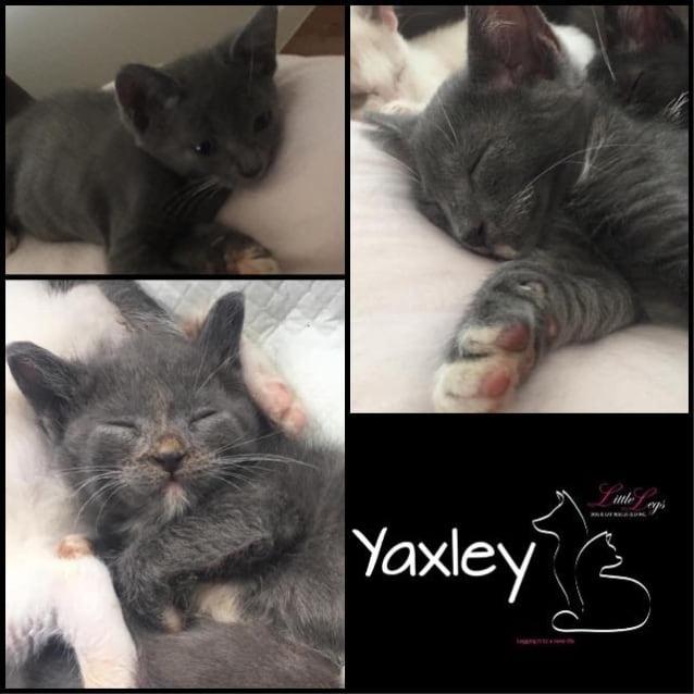 Photo of Yaxley