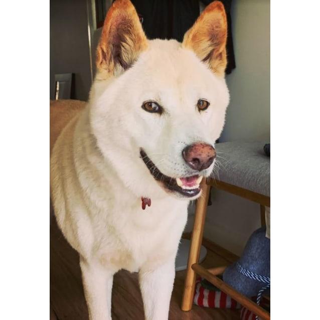 Photo of Cooper