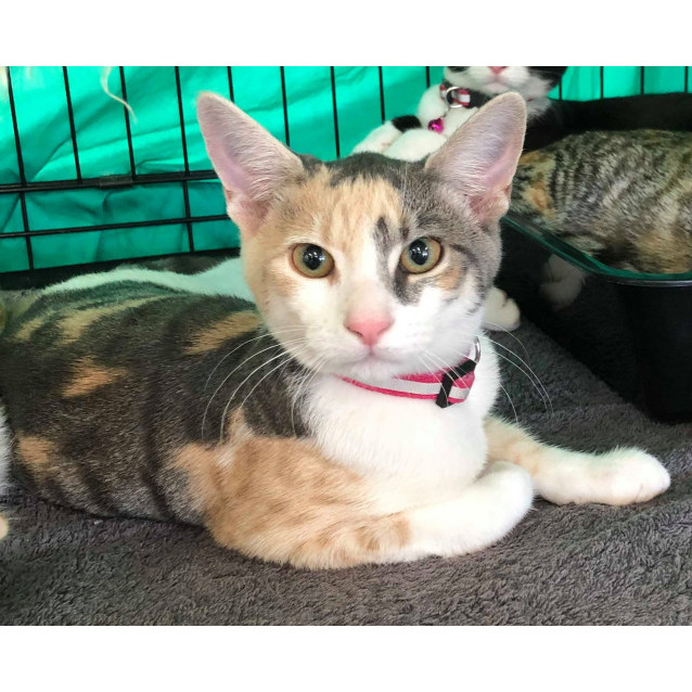 Photo of Nina (Located In Somerville)