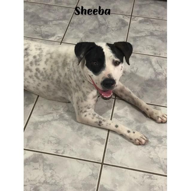 Photo of Sheeba