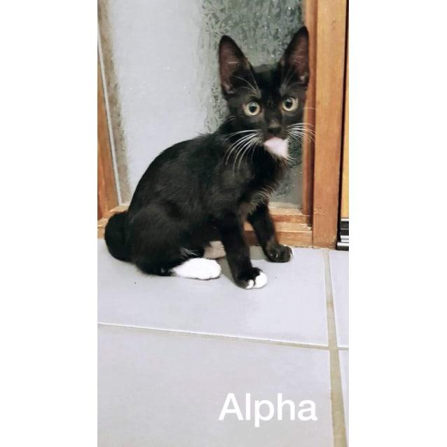 Photo of Alpha