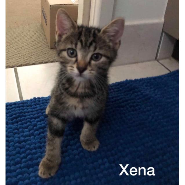 Photo of Xena