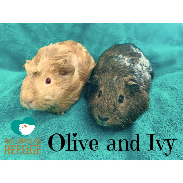 Photo of Olive And Ivy