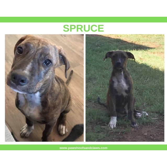 Photo of Spruce