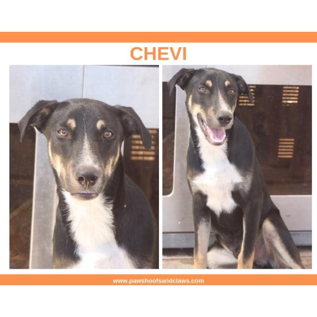 Photo of Chevi