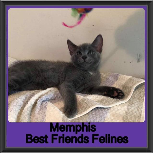 Photo of Memphis
