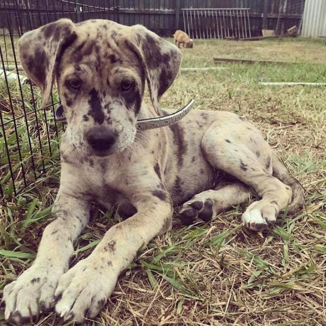 Photo of Cara **Adoption Pending**