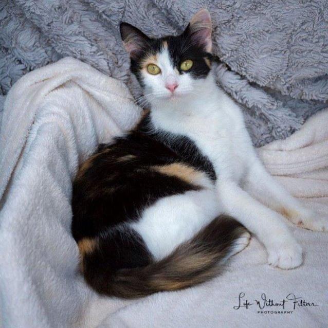 Photo of Zafina