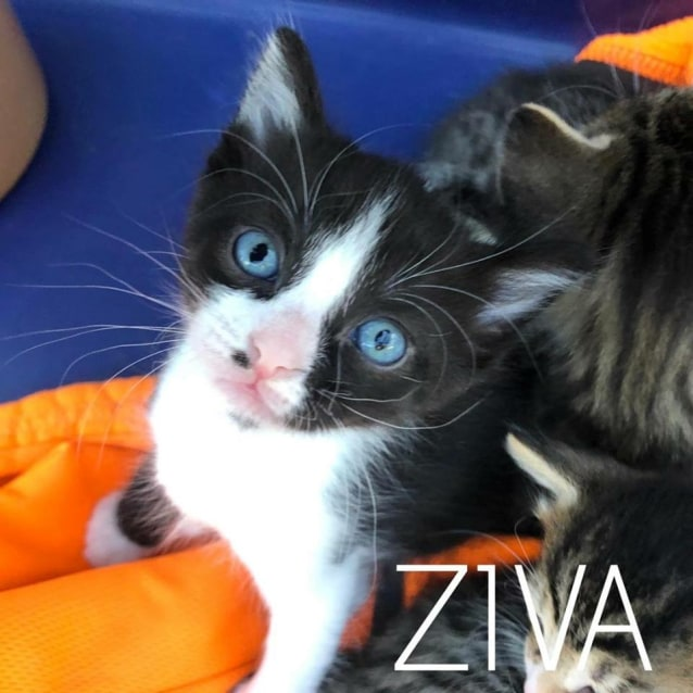 Photo of Ziva
