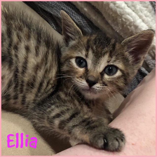 Photo of Ellia