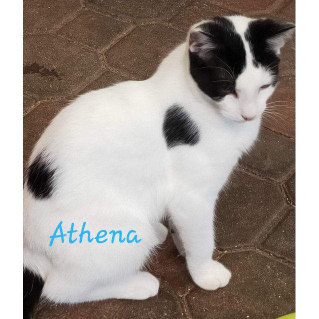 Photo of Athena