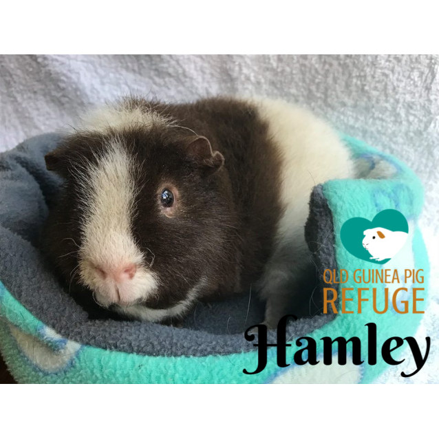 Photo of Hamley