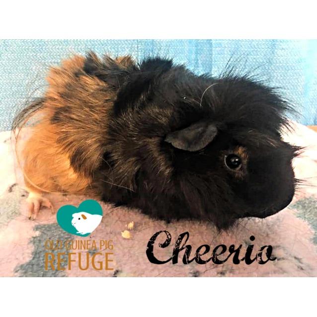 Photo of Cheerio