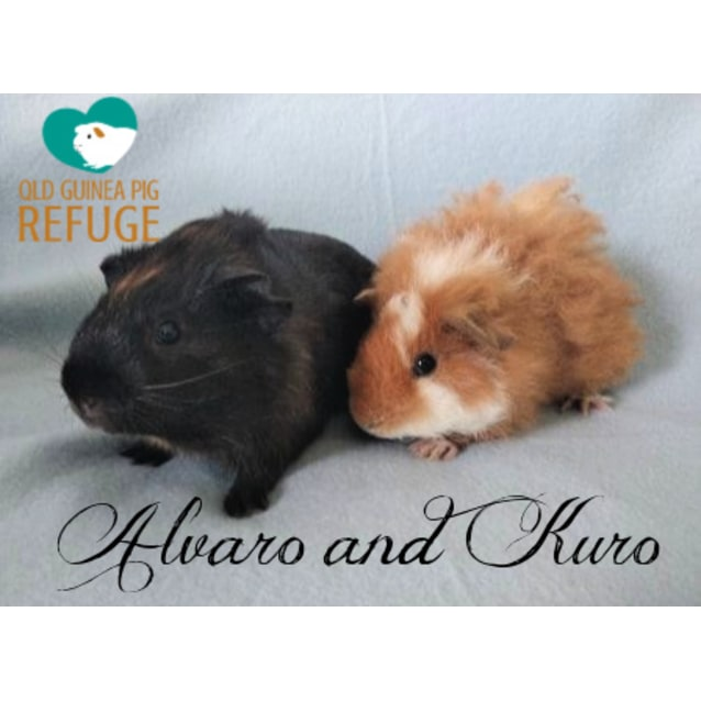 Photo of Alvaro And Kuro (Not Suitable For Kids Under 12)