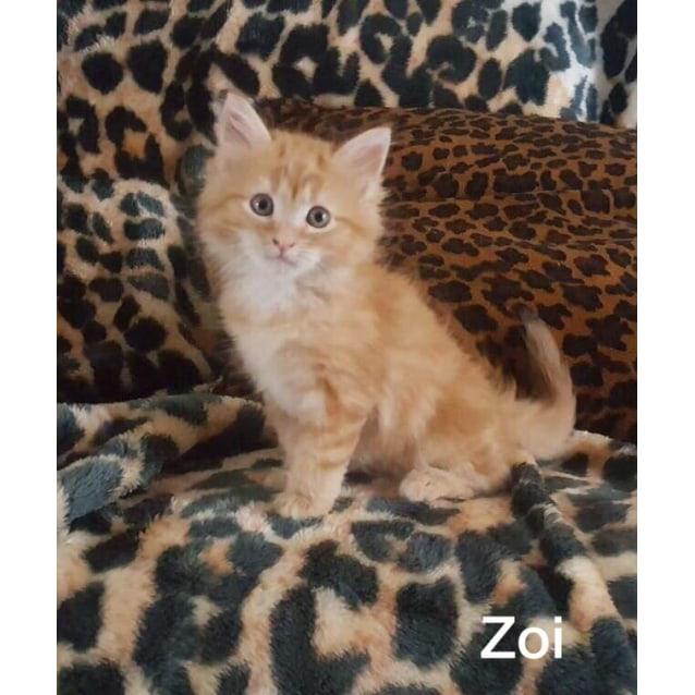 Photo of Zoi