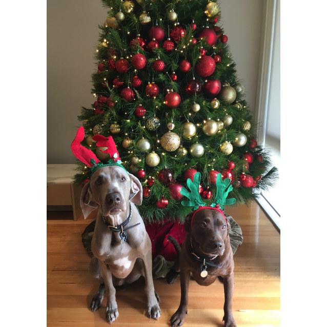Photo of Ziggy & Lola