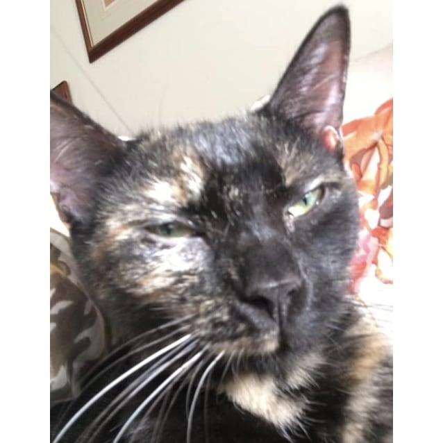 Photo of Fifi