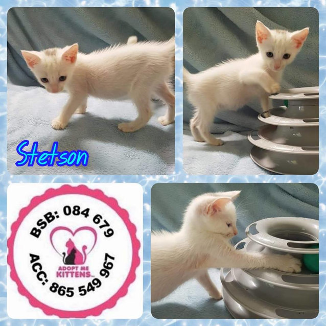 Photo of Stetson