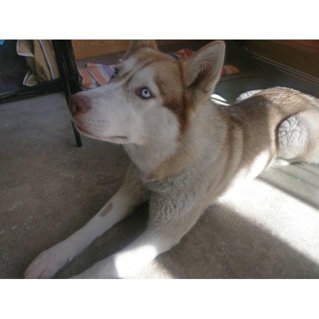 Photo of Nala