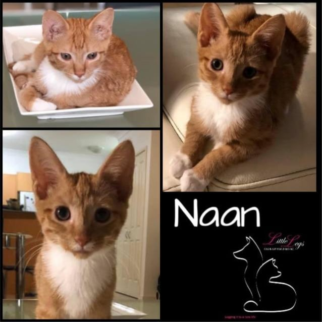 Photo of Naan