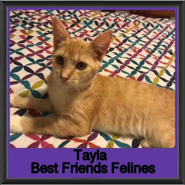 Photo of Tayla