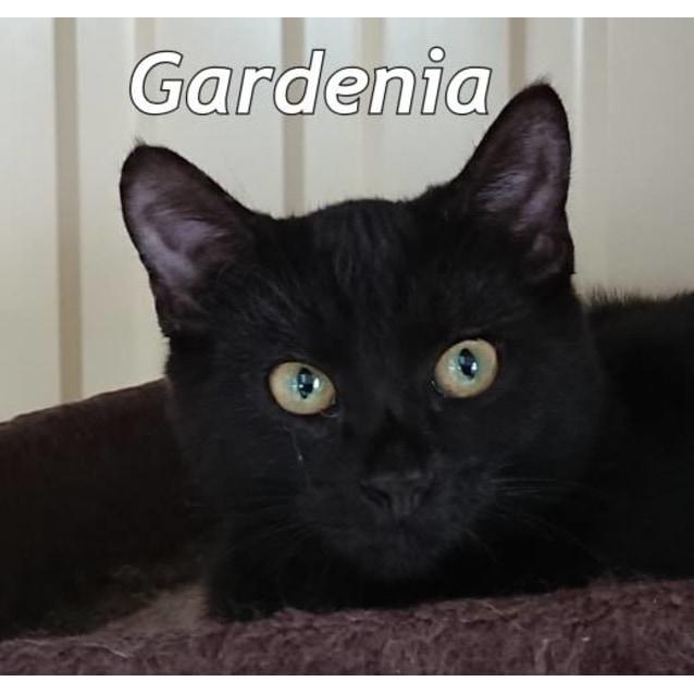 Photo of Gardenia