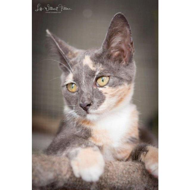 Photo of Jamani