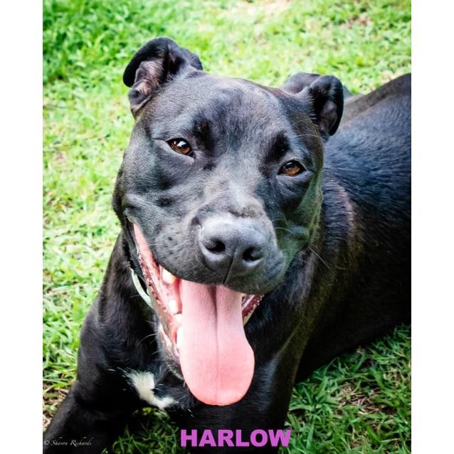 Photo of Harlow