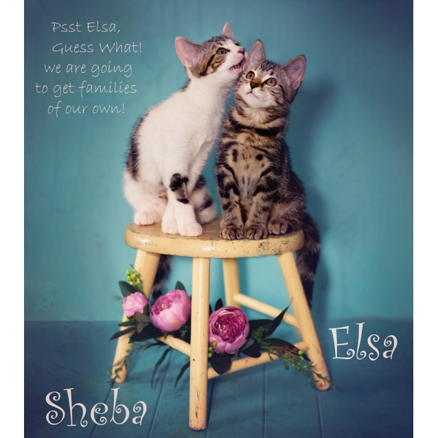 Photo of Sheba And Elsa