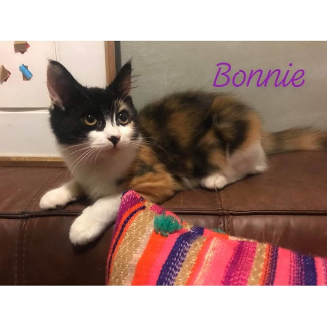 Photo of Bonnie