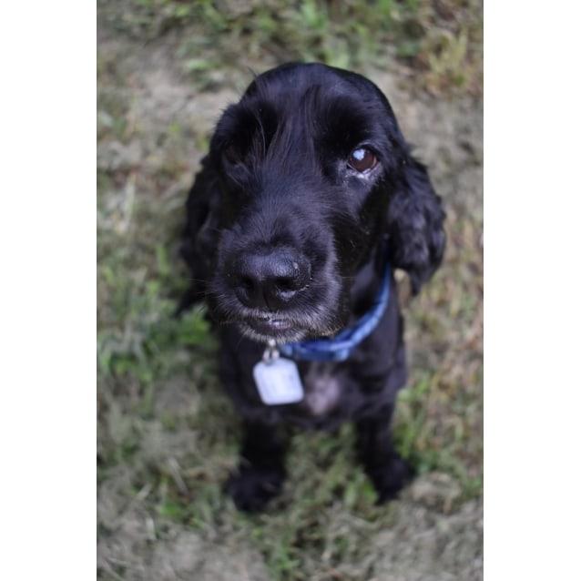 Photo of Benny 🍰