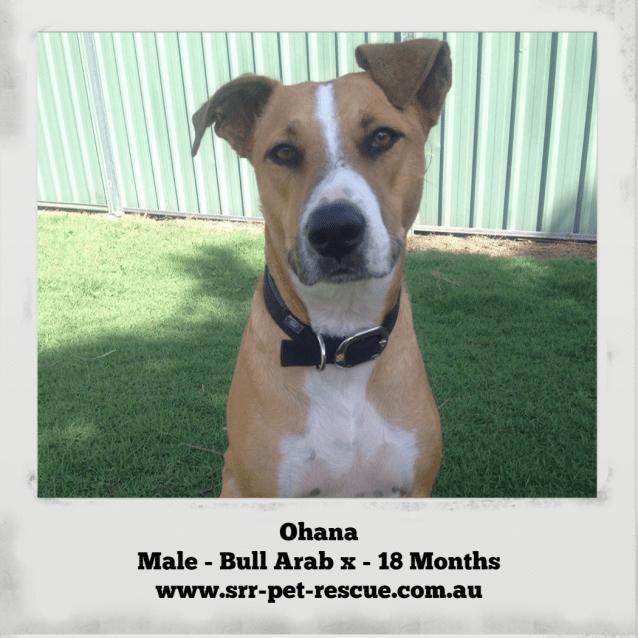 Photo of Ohana