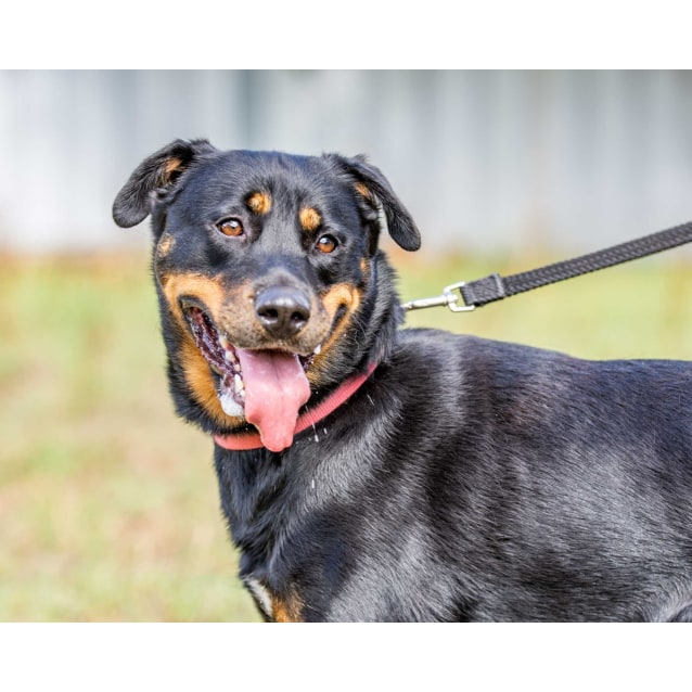 Photo of Karma **On Trial With My New Family**