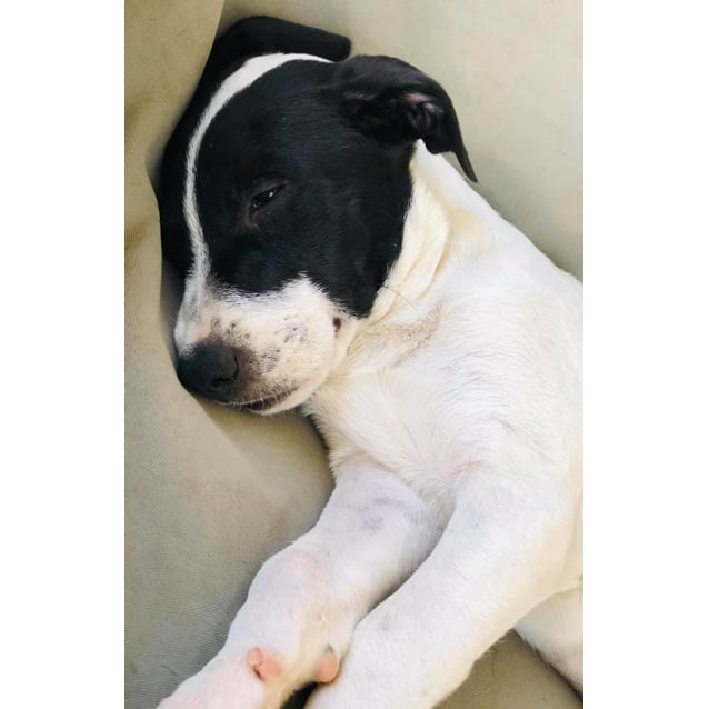 Photo of Dakota