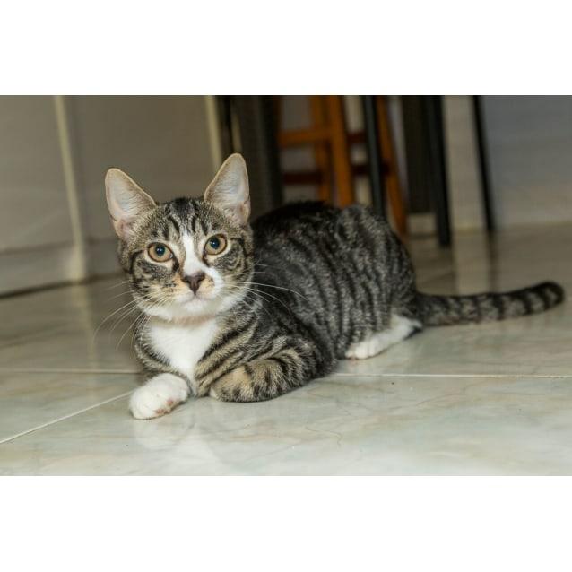 Photo of Chico