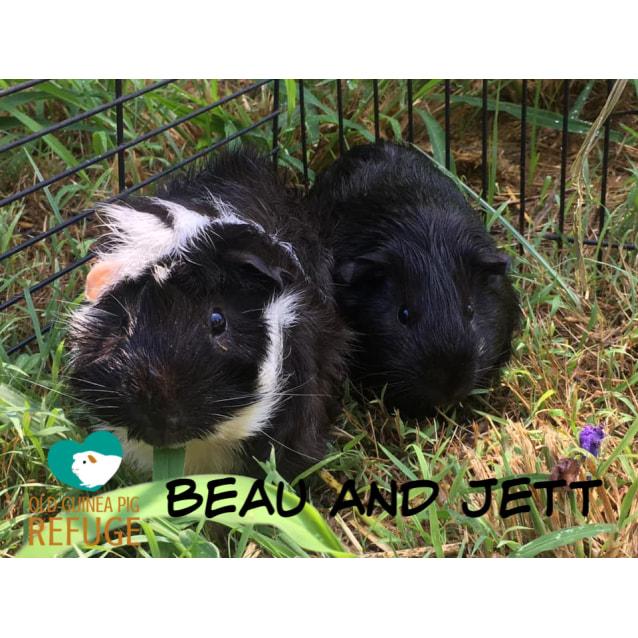Photo of Beau And Jett