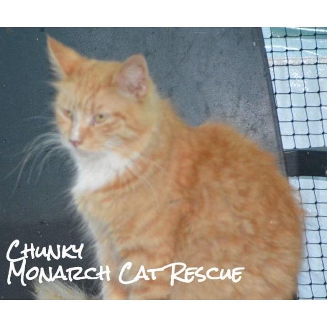 Photo of Chunky