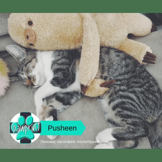 Photo of Pusheen